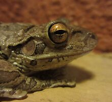 Ribbit by MsEphotography