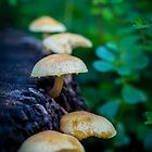Fungi by Keith G. Hawley