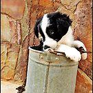 Border Collie Pup by dedakota