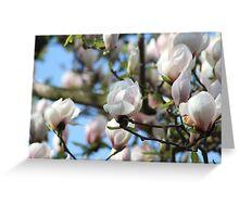 Spring of Blooming  Greeting Card