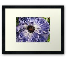 Phony Purple Poppy  Framed Print