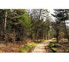 Strolling through the early spring forest Photographic Print