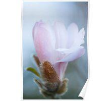 Magnolia 2701 Poster