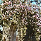 Magnolia Blossoms Everywhere by karina5