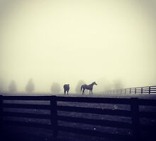 Horses in the Mist by YellowBarn