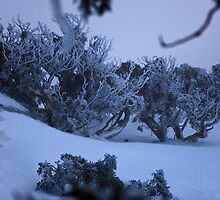 Blue Cow - Frozen Gums View02 by Timothy Kenyon