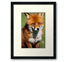 Smart like a Fox Framed Print