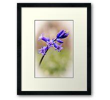Bluebell art Framed Print