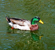 Lucky Duck by hannahsview
