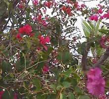 Beautiful Pink Flowers in garden  by creativeja