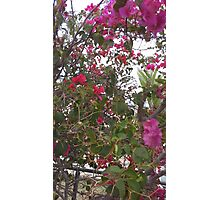 Beautiful Pink Flowers in garden  Photographic Print