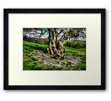A tree in a pool of light Framed Print