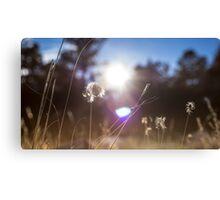 Winding Grasses Canvas Print