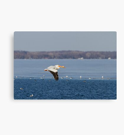 Pelican Flying Into Open Water Canvas Print