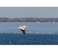 Pelican Flying Into Open Water Photographic Print
