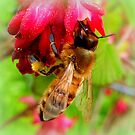 Bee on Jostaberry flower by ©The Creative  Minds