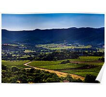 Vineyard landscape in summer Poster