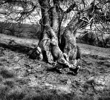 A Tree in a Pool of black and white Light by JonDelorme
