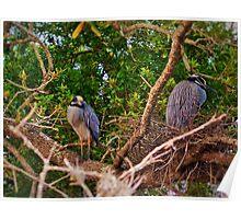 Nest Friends Poster