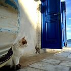 blue door and cat by habish