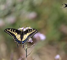 Random butterfly by 2Canons