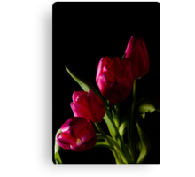 tulip red green black Canvas Print