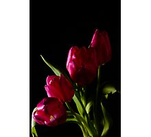 tulip red green black Photographic Print