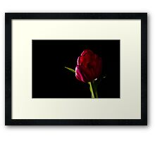 tulip red green black Framed Print