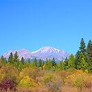 Mount Shasta by Tracy Jones