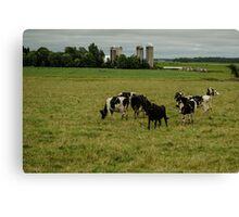 Happy Cows Canvas Print