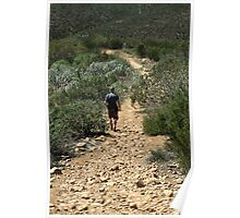 In Sycamore Canyon Poster
