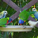 My Very Colouful Feathered Friends by stevealder