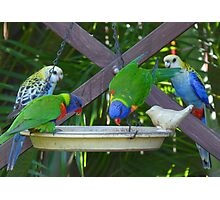 My Very Colouful Feathered Friends Photographic Print