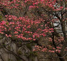 Pink Spring - Dogwood Filigree and Lace by Georgia Mizuleva