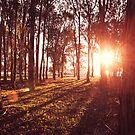 Canberra Sunset by GRACE COSTA