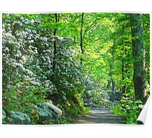 Mountain Laurels Along The Path Poster