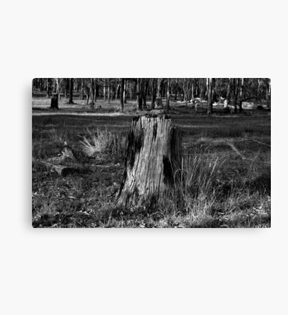 The Ole Stump Canvas Print