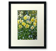 Spring daffodil garden Framed Print