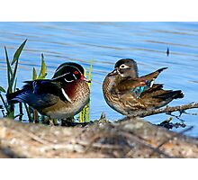 Mr. and Mrs. Wood Duck Photographic Print
