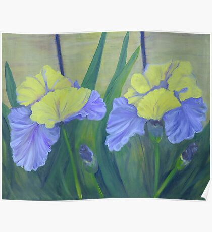 Irises from the Side of the Garage Poster