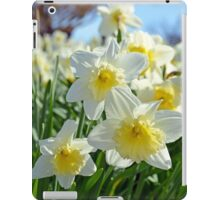 White and yellow spring daffodils iPad Case/Skin