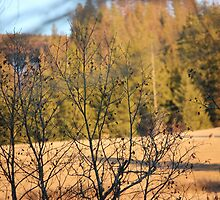 Deer on Mountain Series I -   Afternoon Sun I by prettymeadow