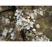 Beautiful Blossom Photographic Print