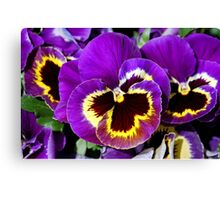 Purple pansy flowers Canvas Print