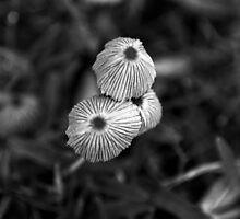Fungi by Emily Rose