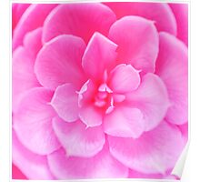 Abstract Pink Rose Poster