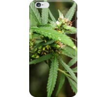 Cannabis II iPhone Case/Skin