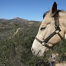 Buster Brown at Sycamore Canyon by Heather Friedman