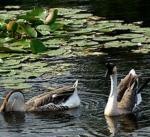 Geese On A Leisurely Jaunt by Vy Solomatenko