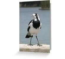 Magpie-lark  Greeting Card